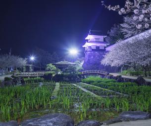 長崎県 桜 大村公園 (玖島城跡) の写真素材 [FYI04297613]