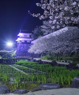 長崎県 桜 大村公園 (玖島城跡) の写真素材 [FYI04297615]