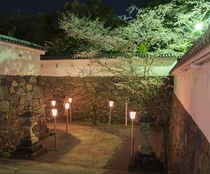 長崎県 桜 大村公園 (玖島城跡) の写真素材 [FYI04297617]