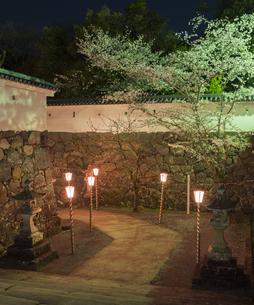 長崎県 桜 大村公園 (玖島城跡) の写真素材 [FYI04297618]