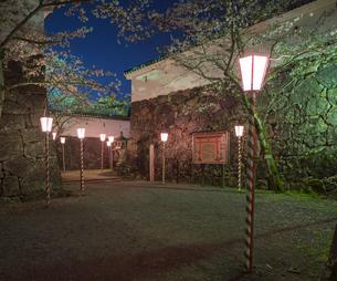 長崎県 桜 大村公園 (玖島城跡) の写真素材 [FYI04297620]