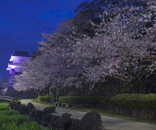 長崎県 桜 大村公園 (玖島城跡) の写真素材 [FYI04297623]