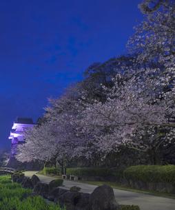 長崎県 桜 大村公園 (玖島城跡) の写真素材 [FYI04297625]