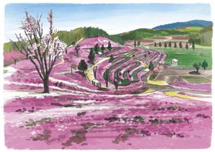 ピンク色に埋め尽くされた東藻琴芝桜公園のイラスト素材 [FYI04297636]