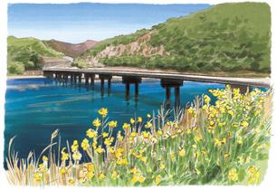 春の訪れを告げる菜の花と四万十川のイラスト素材 [FYI04297641]