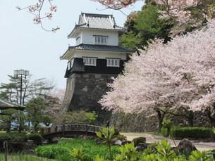 大村公園 板敷櫓台と桜の写真素材 [FYI04297746]
