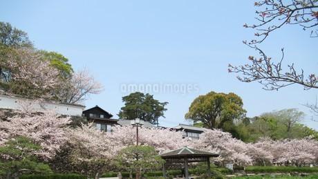 大村公園の桜の写真素材 [FYI04297748]