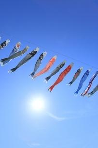 青空の鯉のぼりと太陽の写真素材 [FYI04297773]