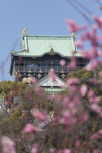 梅林と大阪城の写真素材 [FYI04297845]