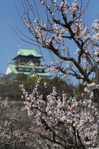 梅林と大阪城の写真素材 [FYI04297851]