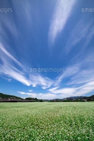 蕎麦の花畑の写真素材 [FYI04297950]
