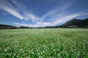 蕎麦の花畑の写真素材 [FYI04297951]