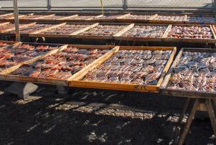 魚市場の店先 ミリン干しの写真素材 [FYI04298081]
