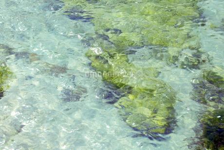 グアム 海 緑の藻 透明 青いうみ  の写真素材 [FYI04298168]