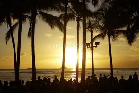 夕日 海辺 ハワイ 旅行 ビーチ hawaii リゾート地 椰子の木の写真素材 [FYI04298170]