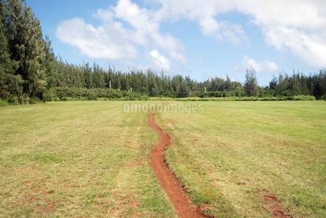 野原 青空 まっすぐな道 野外 どこまでも続く 森の写真素材 [FYI04298172]