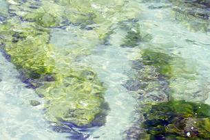 グアム 海 緑の藻 透明 青いうみ BLue ocean Sea Guamの写真素材 [FYI04298180]