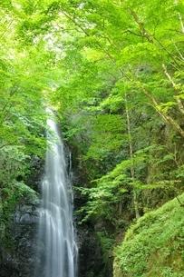 百尋ノ滝の写真素材 [FYI04298432]