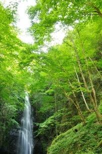 百尋ノ滝の写真素材 [FYI04298433]
