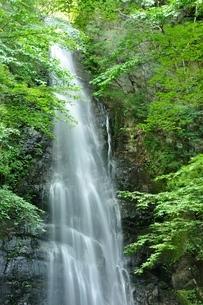 百尋ノ滝の写真素材 [FYI04298436]