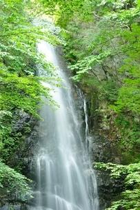 百尋ノ滝の写真素材 [FYI04298437]