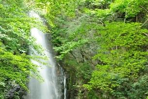 百尋ノ滝の写真素材 [FYI04298439]