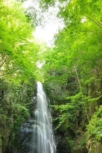 百尋ノ滝の写真素材 [FYI04298440]