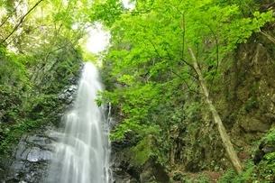 百尋ノ滝の写真素材 [FYI04298445]