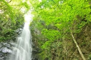 百尋ノ滝の写真素材 [FYI04298454]