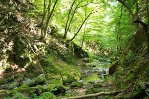 奥多摩 川乗谷の写真素材 [FYI04298460]