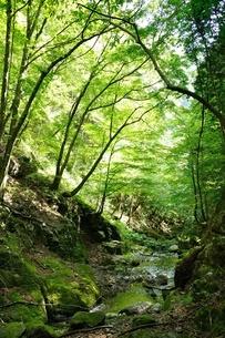奥多摩 川乗谷の写真素材 [FYI04298461]