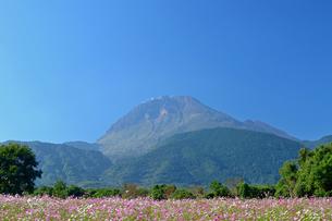 平成新山とコスモス畑の写真素材 [FYI04298510]