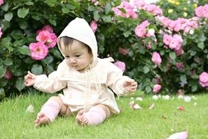 芝生に座っている幼児の写真素材 [FYI04298593]