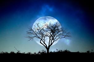 月と枯れ木の写真素材 [FYI04298723]