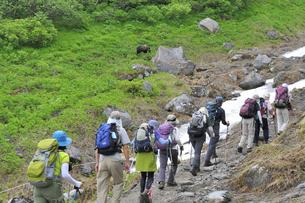 ヒグマと登山者(北海道・知床)の写真素材 [FYI04298735]