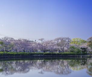 長崎県 桜 大村公園 (玖島城跡) の写真素材 [FYI04298895]