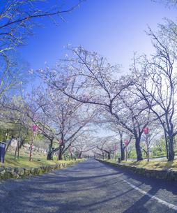 長崎県 桜 大村公園 (玖島城跡) の写真素材 [FYI04298917]