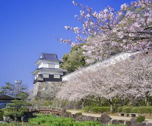 長崎県 桜 大村公園 (玖島城跡) の写真素材 [FYI04298919]