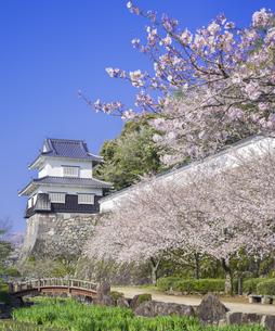 長崎県 桜 大村公園 (玖島城跡) の写真素材 [FYI04298921]