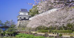 長崎県 桜 大村公園 パノラマ (玖島城跡) の写真素材 [FYI04298922]