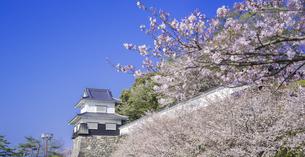 長崎県 桜 大村公園 パノラマ (玖島城跡) の写真素材 [FYI04298924]