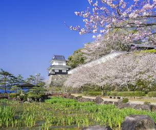 長崎県 桜 大村公園 (玖島城跡) の写真素材 [FYI04298925]