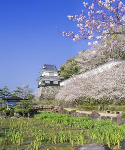 長崎県 桜 大村公園 (玖島城跡) の写真素材 [FYI04298927]