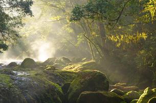 朝の菊池渓谷の写真素材 [FYI04298937]