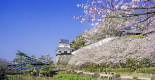 長崎県 桜 大村公園 パノラマ (玖島城跡) の写真素材 [FYI04299267]