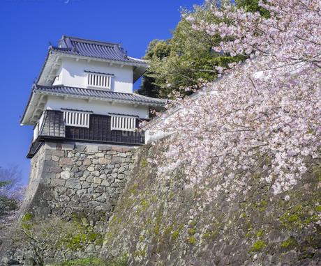 長崎県 桜 大村公園 (玖島城跡) の写真素材 [FYI04299269]