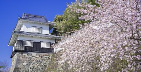 長崎県 桜 大村公園 (玖島城跡) の写真素材 [FYI04299273]