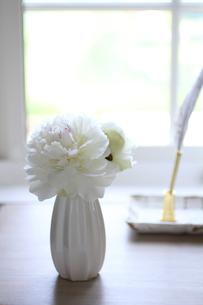 白いシャクヤクを窓際にの写真素材 [FYI04299317]