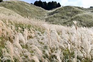 十里木高原展望台のススキの写真素材 [FYI04299441]