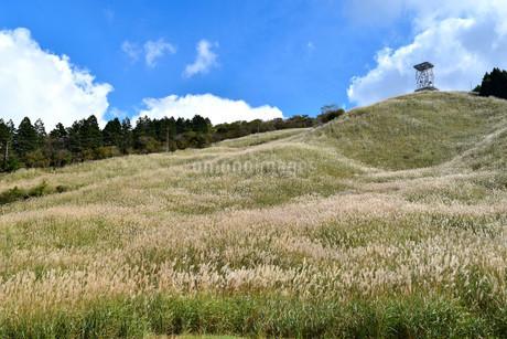 十里木高原展望台のススキの写真素材 [FYI04299443]